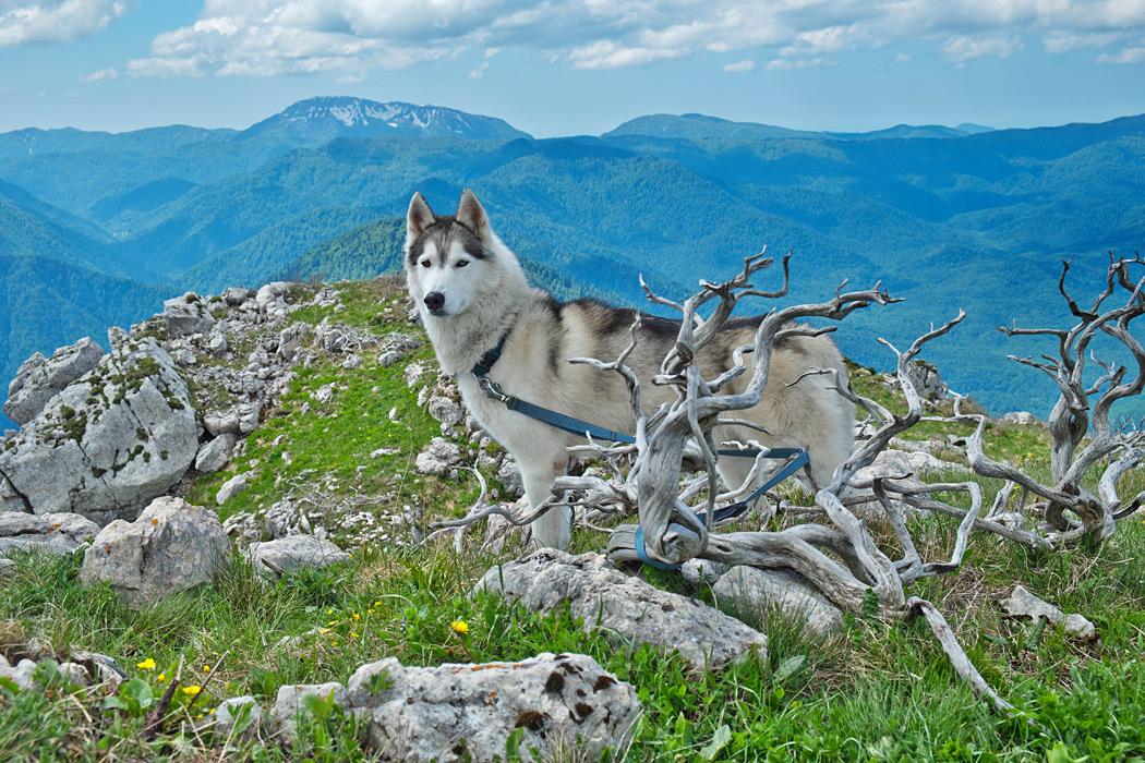 Плато Черногор 21-22 мая 2016