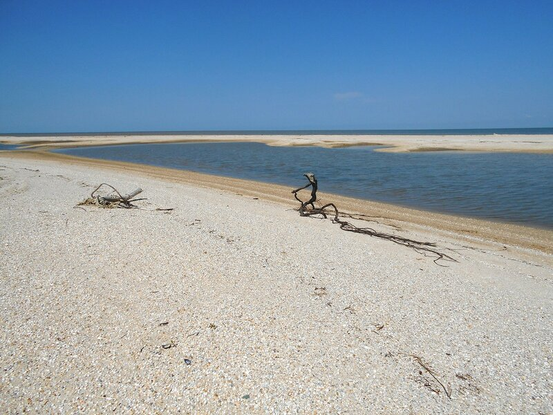 На чистых песках ... DSCN5709.JPG