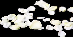 лепестки