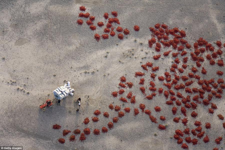 13. В округе Байчэн после урожая разложили сушить красный перец. Это очень отдаленные и этнически ра