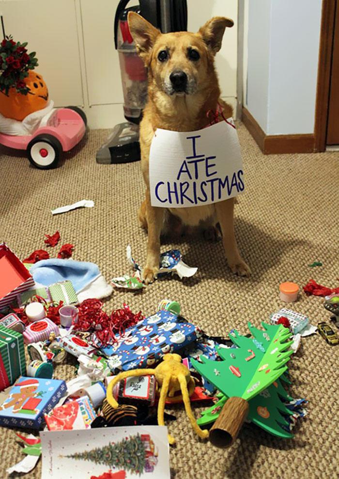 «Я сожрал Рождество».
