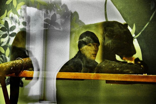 Zoo of Yekaterinburg (Russia). Reflections of visitors in the glasses, protecting open-air cages