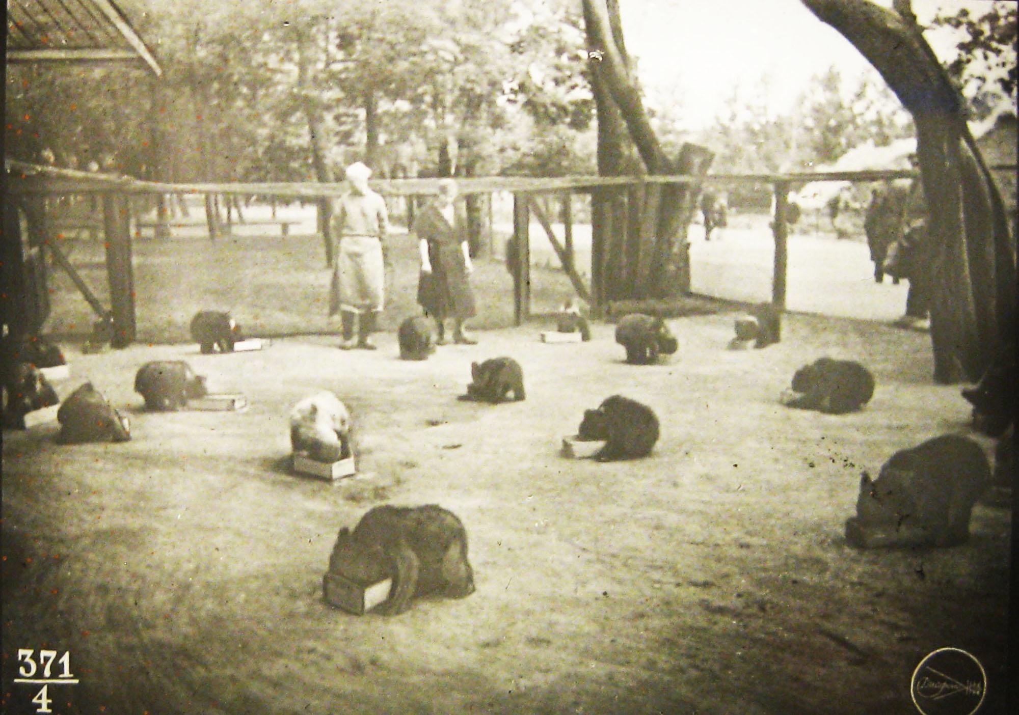 Обед на площадке молодняка. Диапозитив из серии «Мохнатый детский сад», 1937 год. Фото: архив Веры Ч