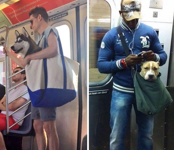 В нью-йоркском метро нельзя с собаками, если только они не помещаются в сумочку. Эти парни нашли вых