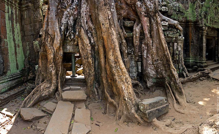 Корни и храмовая стена слились и образовали единое целое. Дерево буквально вросло в каменную кладку,