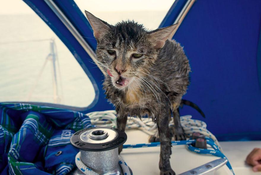 В какой-то момент Джонсоны случайно обнаружили, что кошка умеет плавать.