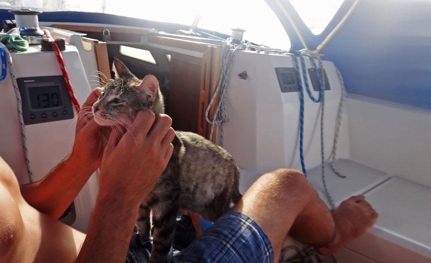 Эти двое все бросили и отправились путешествовать — со своей кошкой