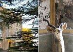 lucinda-wharton-georgian-mansion.jpg