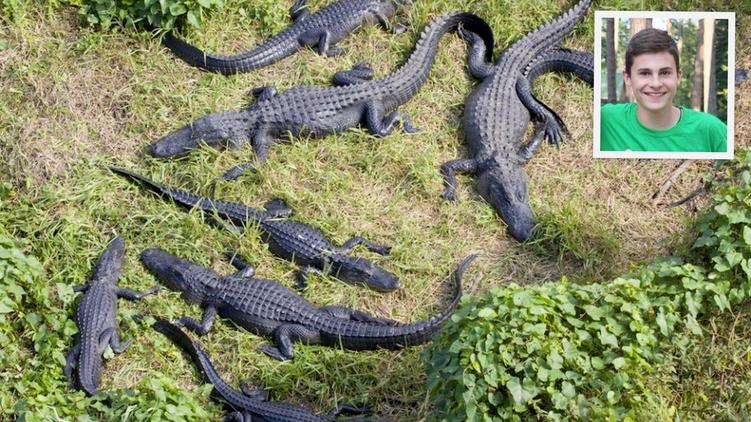 Сыну Виталия Кличко воФлориде едва неоткусил руку аллигатор