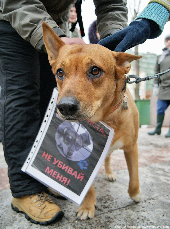 47. Митинг в защиту собак. 31.03.12.06...jpg