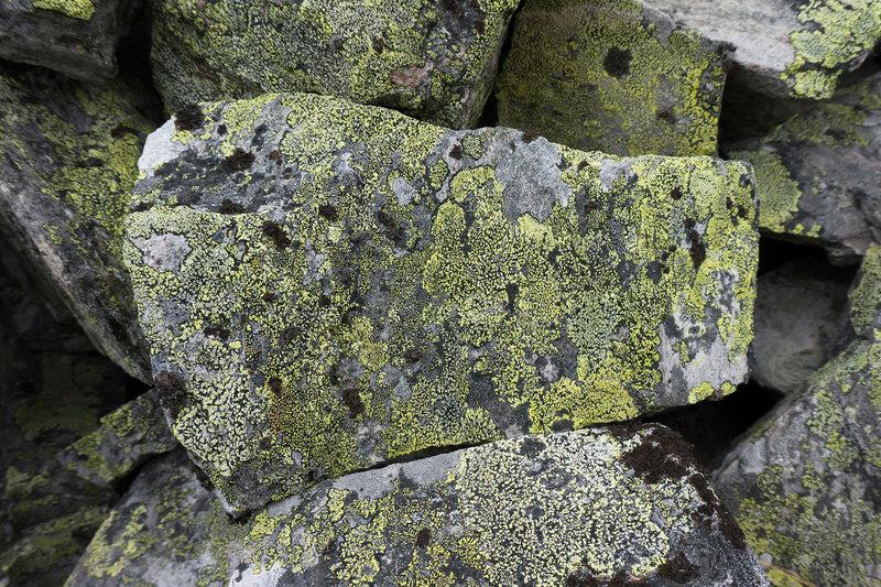 желтый лишайник (map lichen, ризокарпон географический) на камнях в горах Норвегии