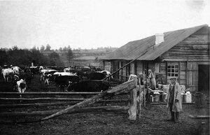 Совхоз Баранча. На летнем пригоне. 1930.