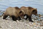 Медвежата..bmp