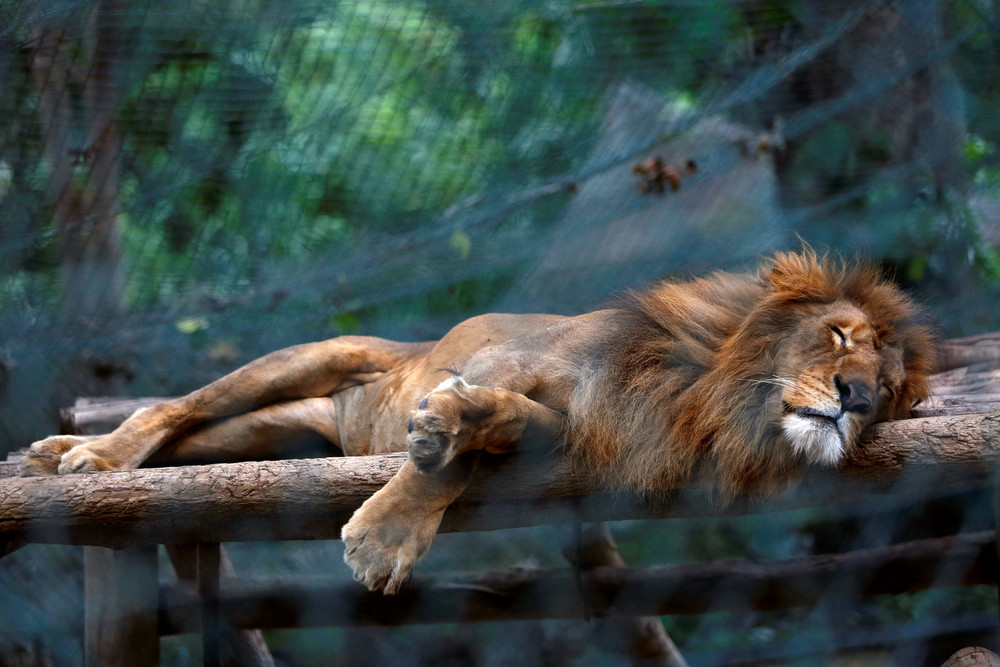 Голодные животные в зоопарках Венесуэлы