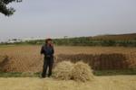 Фермер перед полем 24 июня 2015, в Южной Хванхэ, Северная Корея.png