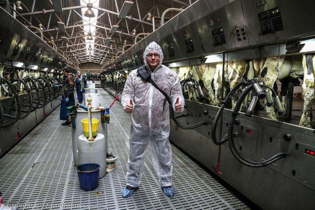 ТОП-20 крупнейших производителей товарного молока в России в 2020 году МОЛОЧНАЯ,ПИЩЕВАЯ