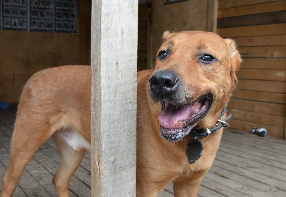 Барбос собака из приюта догпорт