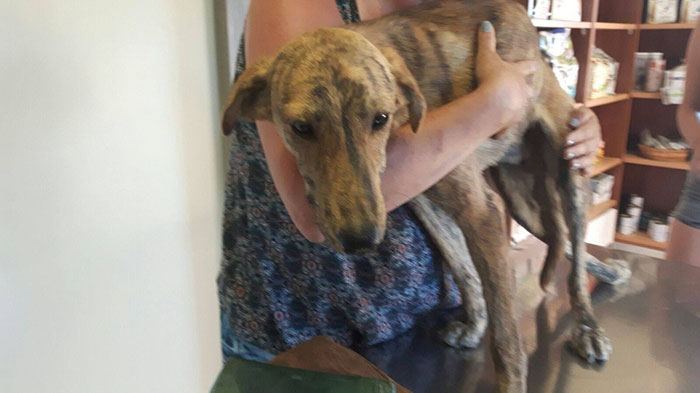 Его осмотрел ветеринар и сказал, что, судя по характеру травмы, пса ударили и сломали ему позвоночни