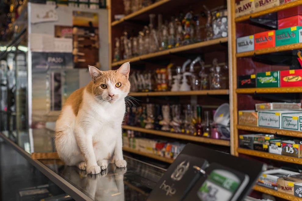 Представители семейства кошачьих, живущие в магазинах Нью-Йорка. Серия снимков от Тамар Арсланьян (Tamar Arslanian)