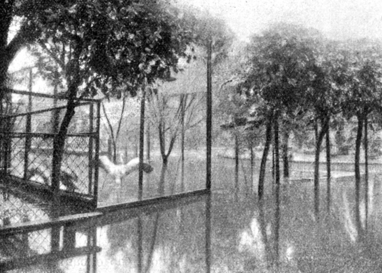 Затопленный сад, 1913 год. Фото: архив Московского зоопарка. Сегодня взоопарке проводится множество