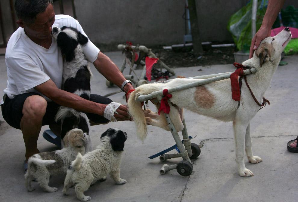 9. Чихуа?хуа — самая маленькая порода собак, названная в честь мексиканского штата Чиуау. Эта р
