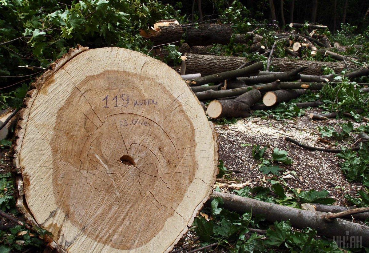 Обыск уПогранслужбы: Офицеров подозревают ввырубке леса свывозом вСловакию