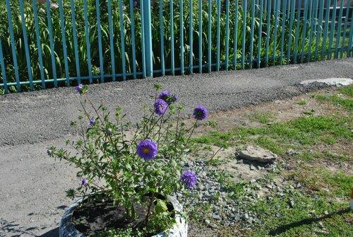 цветы в гимназии №1