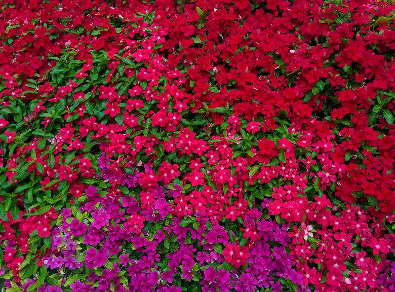 Цветочный ковёр!