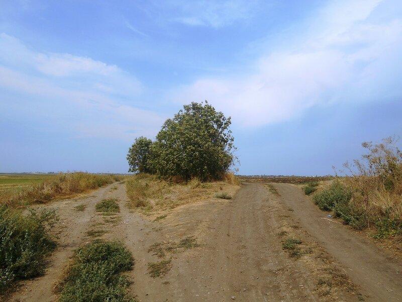 Две дороги ... DSCN8588.JPG
