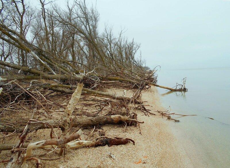 У деревьев, что близко у воды морской ... DSCN4268.JPG