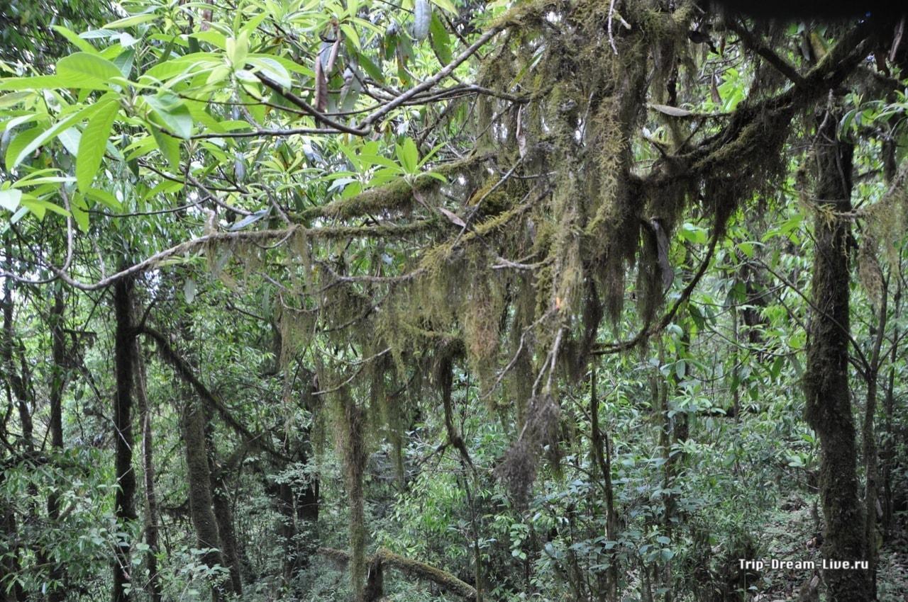 Мшистые деревья