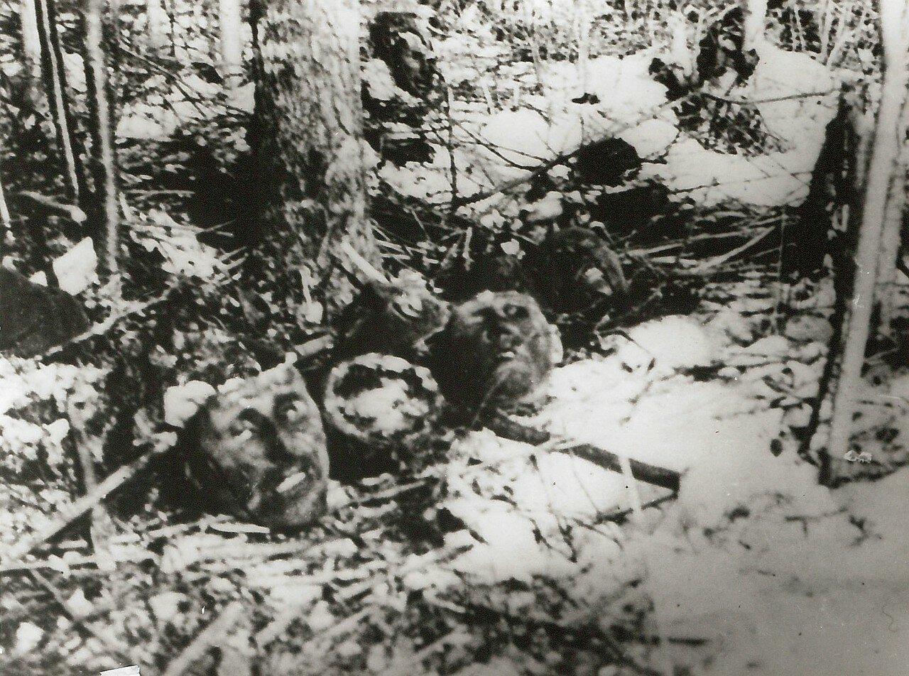 1944. Трупы военнопленных, которые были заживо похоронены нацистами в лесу