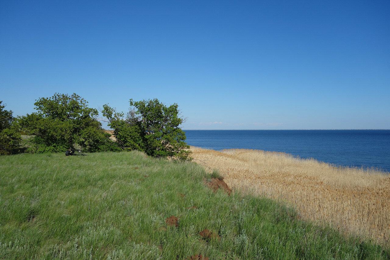 берег зарос тростником