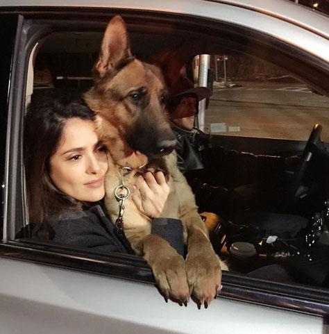 Застрелен пес актрисы Сальмы Хайек