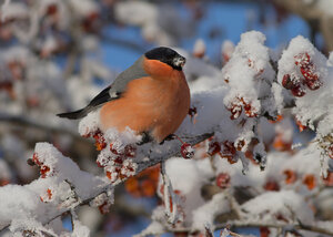 В январский мороз