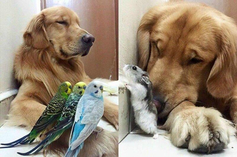 Собака, хомяк ивосемь птиц– дружная семейка