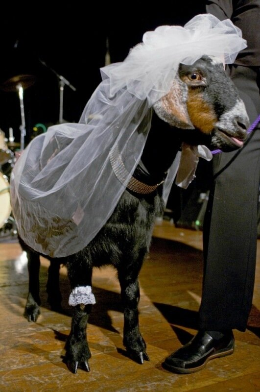 Прикольные картинки в свадебных платьях, днем рождения наташа
