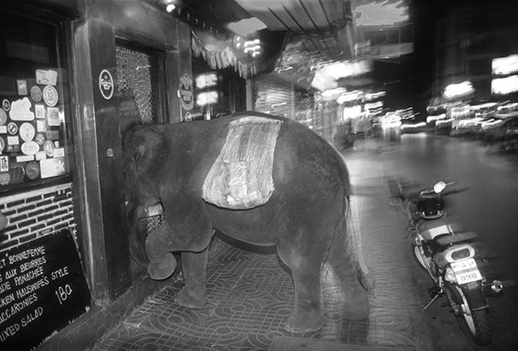 15. Слон попрошайничает в Бангкоке.
