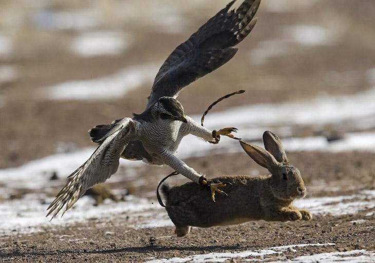 1. Кусбеги — это казахское литературное название охотников с хищными птицами. (Фото Shamil Zhum
