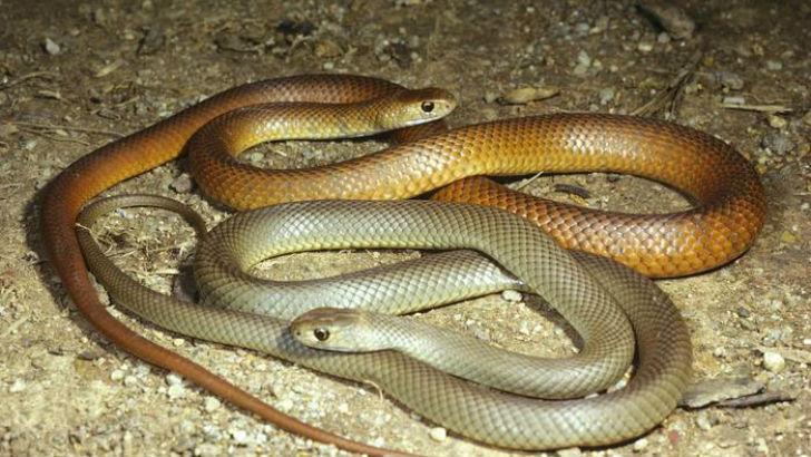 Можно сказать, что змеи как следует подготовлены к такому важному делу, как продолжение рода. Больши