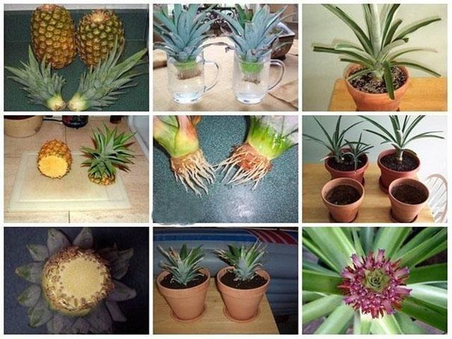 ananasik.jpg