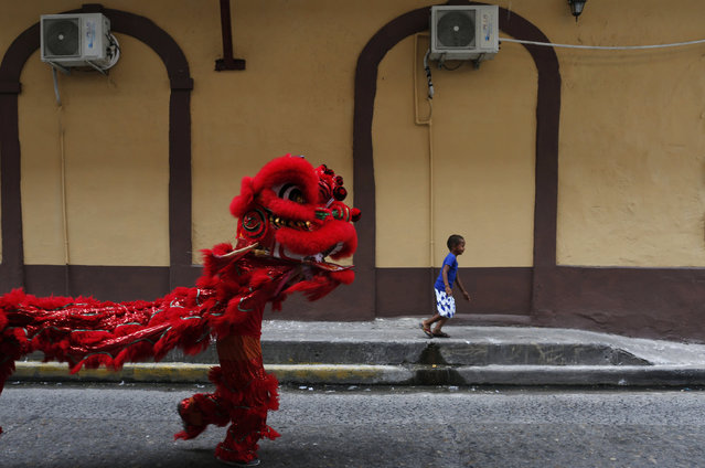 A boy runs as dancers perform a lion dance during celebrations of the Chinese Lunar New Year of the