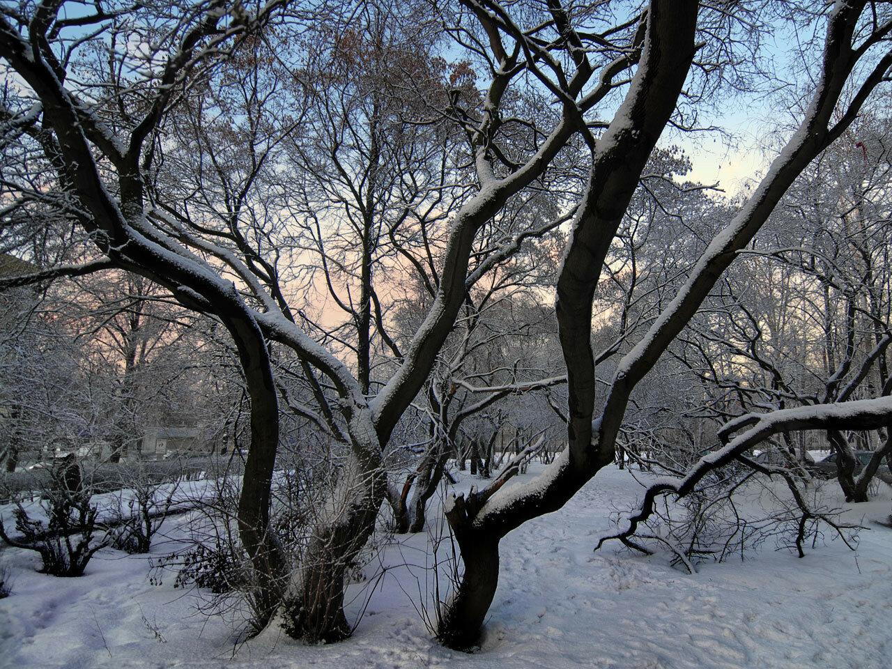 Морозный вечер. Автор фото: Юрий Семенов