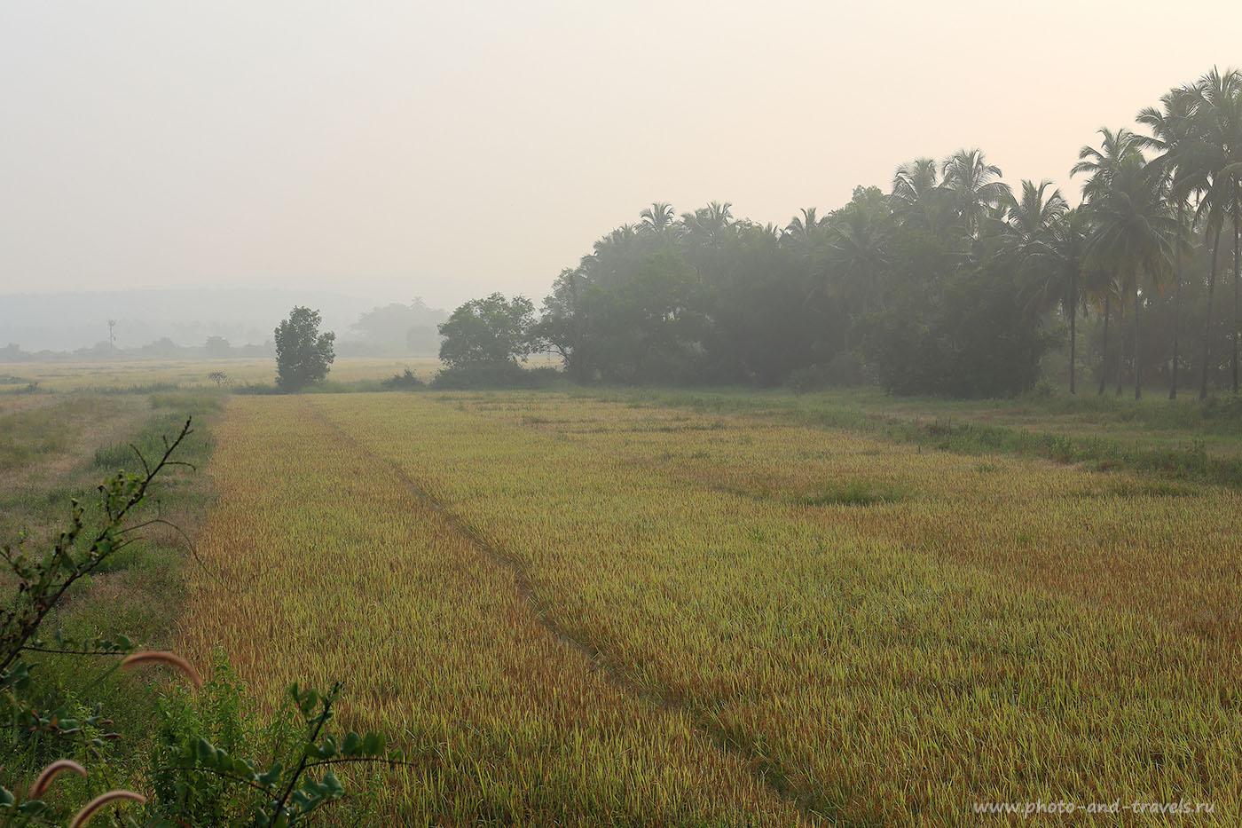 Фото 11. Поле утром. Отзыв о поездке по Гоа на поезде. Самостоятельная поездка в Индию (24-70, 1/160, 0eV, f9, 67mm, ISO 100)