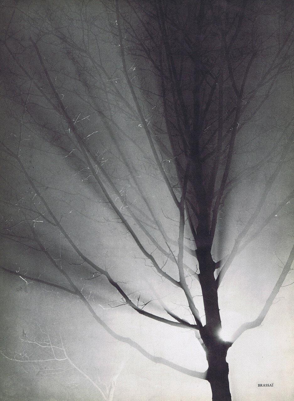 1937 Голое дерево в ночном небе