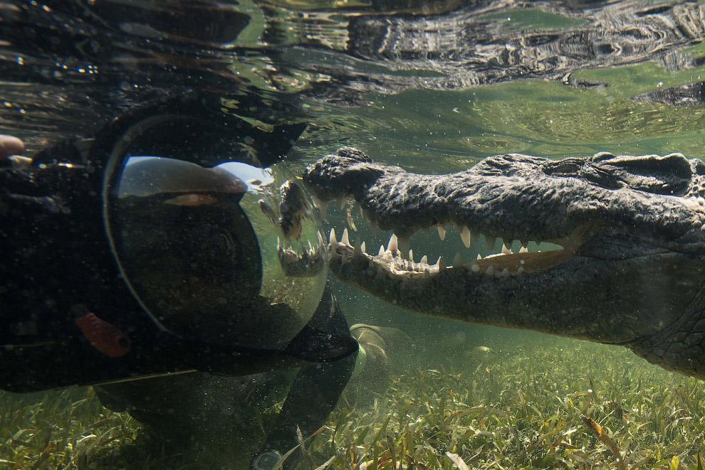 4. Крокодилы — единственные выжившие представители подкласса архозавров. Считается, что первые