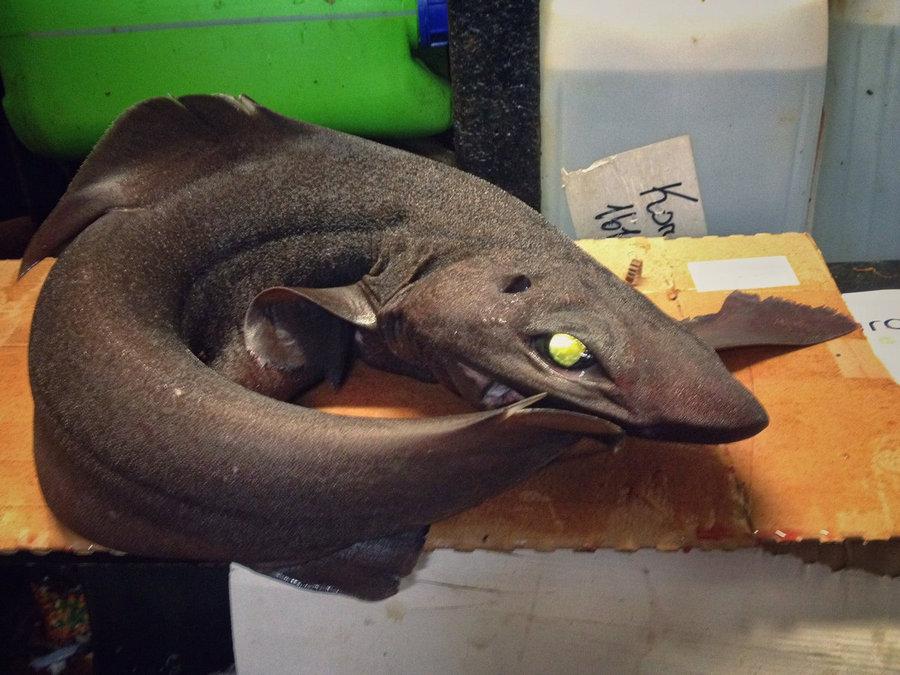 Моряк выкладывает фотографии самых странных рыб, пойманных траулером