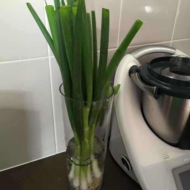 © sharnyandjulius  Зеленый лук может оставаться свежим гораздо дольше, если хранить его вбанк