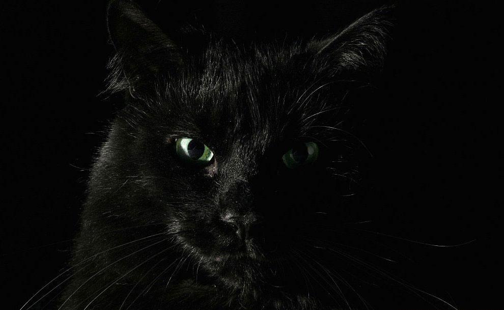 Только кошки знают, как получить пищу без труда, жилище без замка и любовь без треволнений. У.Л