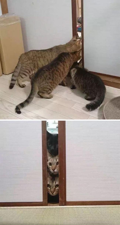 © imgur.com   Кошку впервые вывели наулицу
